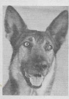 Kazan the Wonder Dog